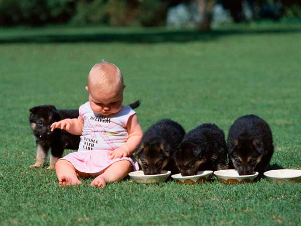 Kids With Dogs Being Kid Friendly