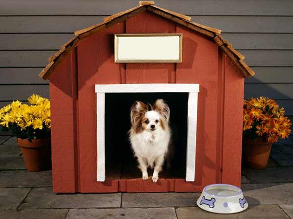 comfortable dog house